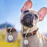 Dog wearing collar with engraved dog tags (also for cats)