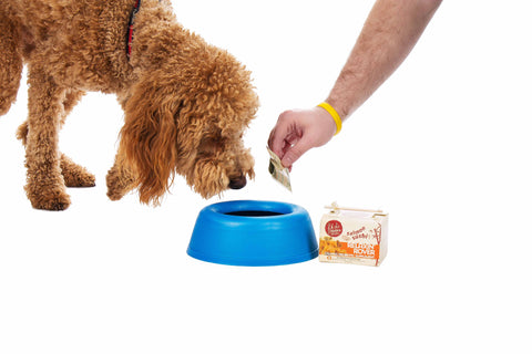 Best Anti Inflammatories For Dogs