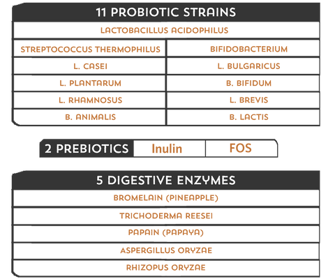 List of probiotics prebiotics and digestive enzymes in Good Guts