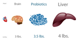 image comparing number of probiotics in your system to other body organs