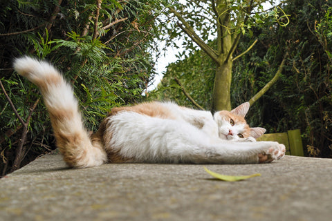 a cats tail lying down on pavement