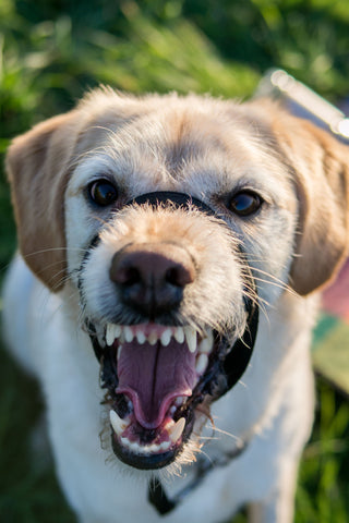 dealing with dog on dog aggression