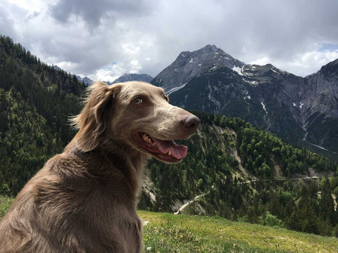 pretty mountains and dog