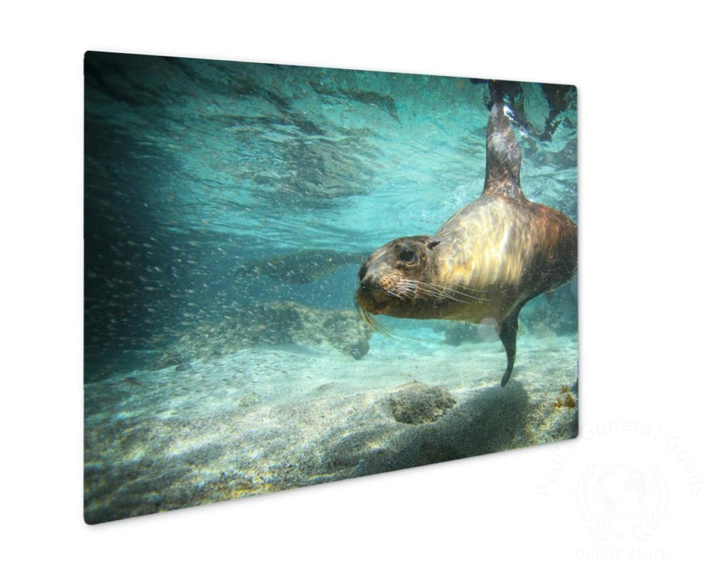 Metal Panel Print Sea Lion Swimming Underwater In Ocean