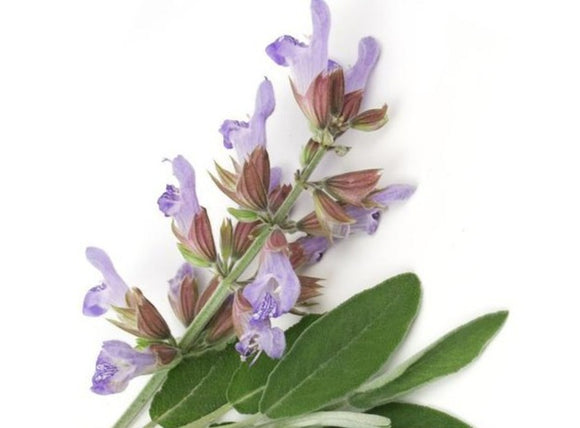 Clary Sage Essential Oil - 5ml