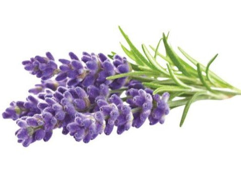 Lavender Essential Oil - 10ml