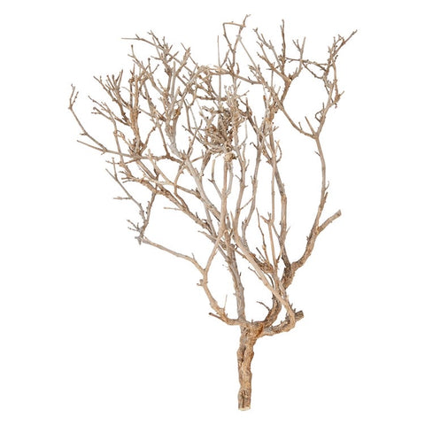 Dried Natural Justicia Sea Bush - Shackteau Interiors
