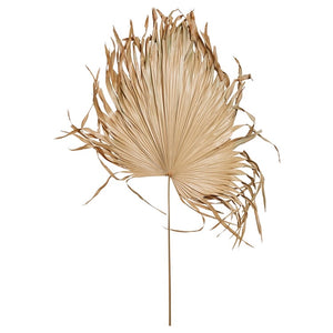 Dried Palm Fan Leaf