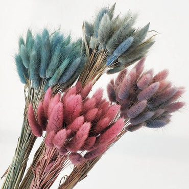 30Pcs/lot Gradient Lagurus Ovatus Natural Dried Flowers Bouquet Wedding Home Decoration Rabbit Tail Grass Real Flowers
