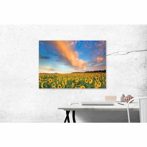 Sunflowers - Pure Michigan Canvas
