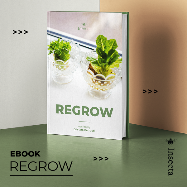 EBOOK - REGROW - Insecta Shoes Brasil