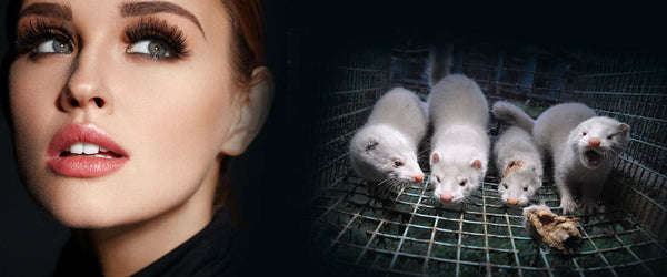 Why it's impossible for mink lashes to be cruelty-free