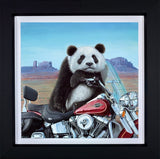 Steve Tandy, Born to be Wild, Framed