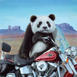 Steve Tandy, Born to be Wild