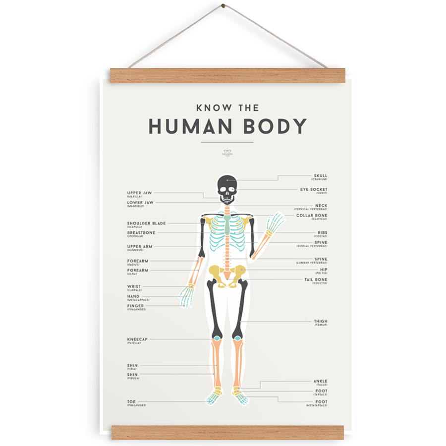 Poster . Learning - Human Body
