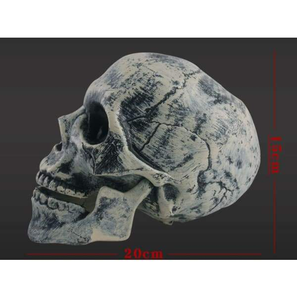 Halloween skeleton - Resin - Halloween Supplies