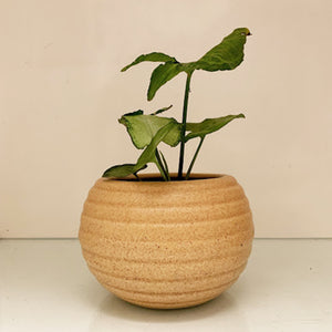 Butterscotch Round Planter