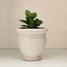 Load image into Gallery viewer, White Classic Planter