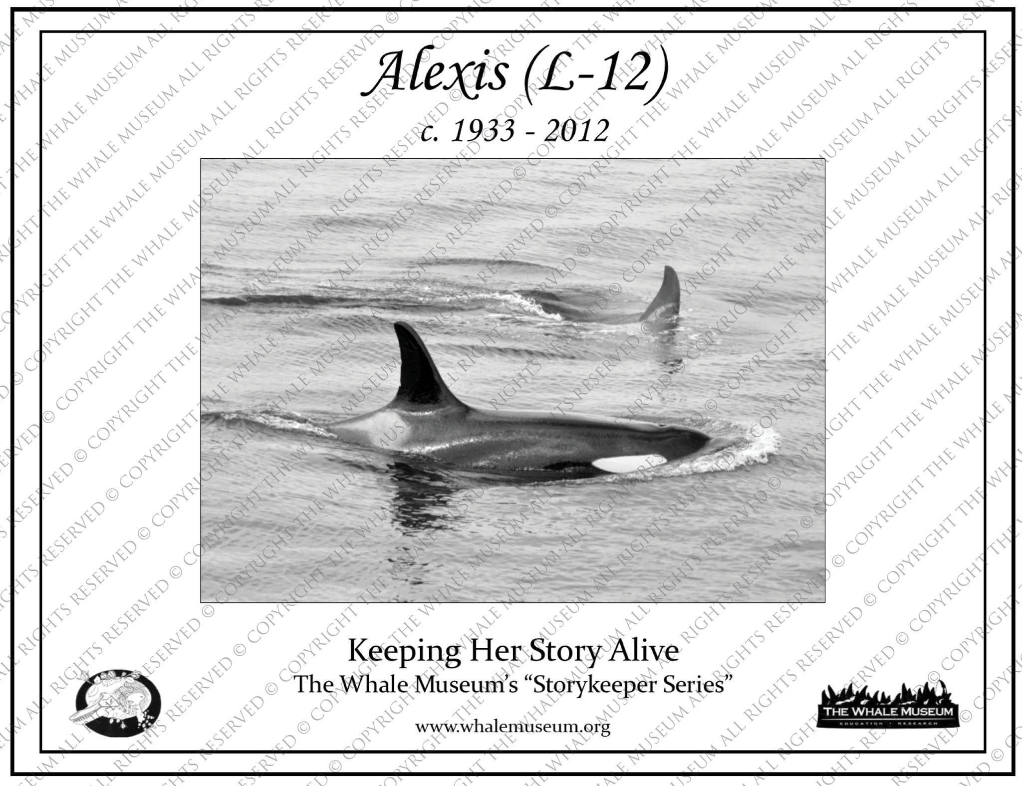 Alexis (L-12) Storykeeper
