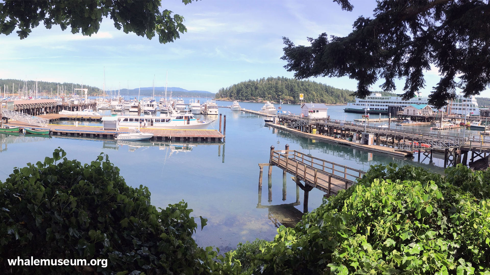 Friday Harbor Background