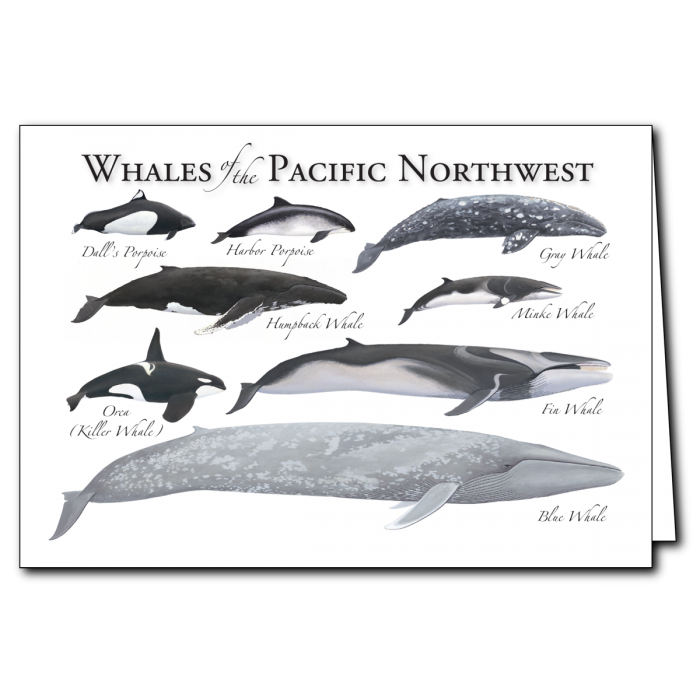 Whales of the Pacific Northwest Card