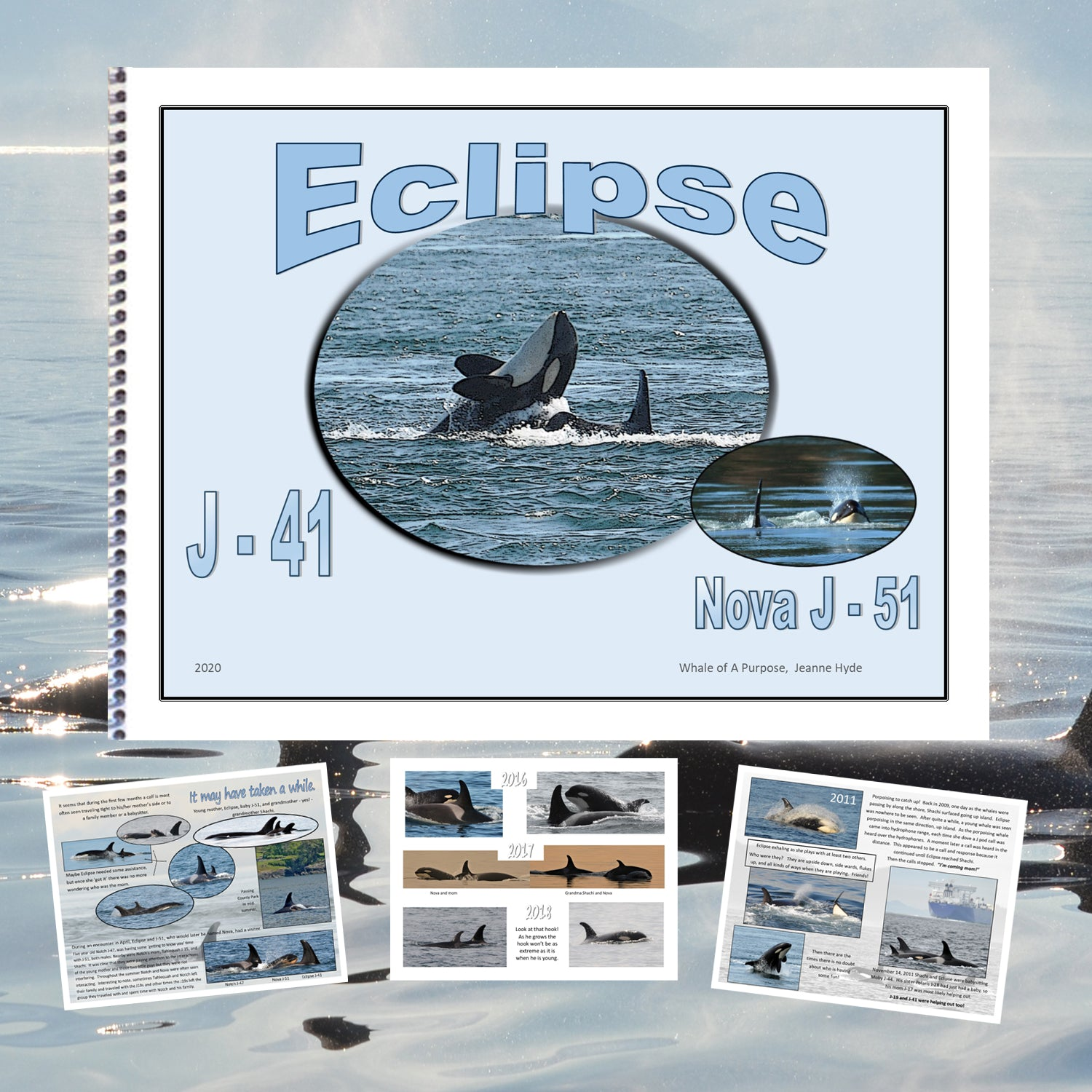 A Glimpse Into the life of Eclipse (J-41)