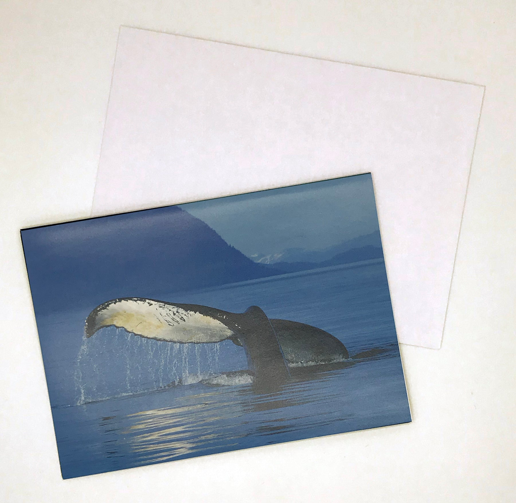 Humpback Tail Fluke Card