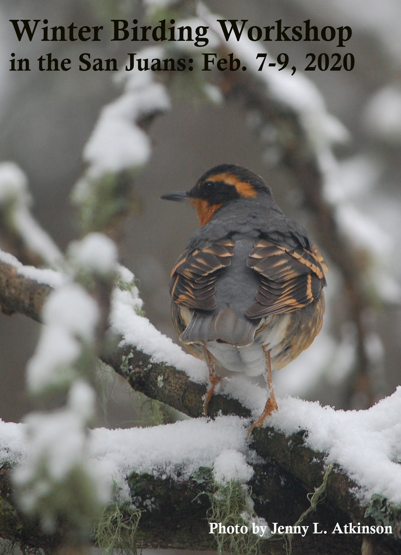 Winter Birding Workshop in the San Juans: February 7-9, 2020