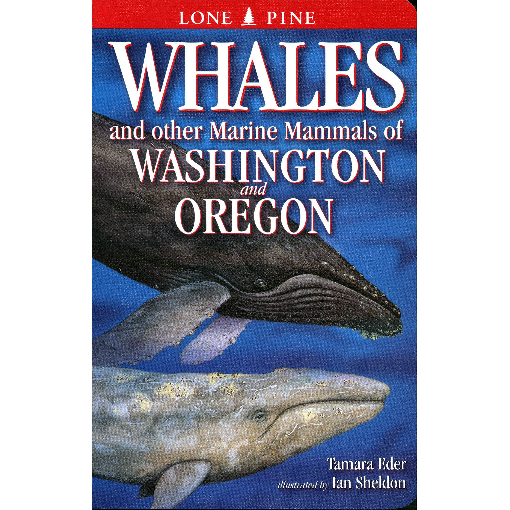 Whales & Other Marine Mammals of Wash. & Oregon