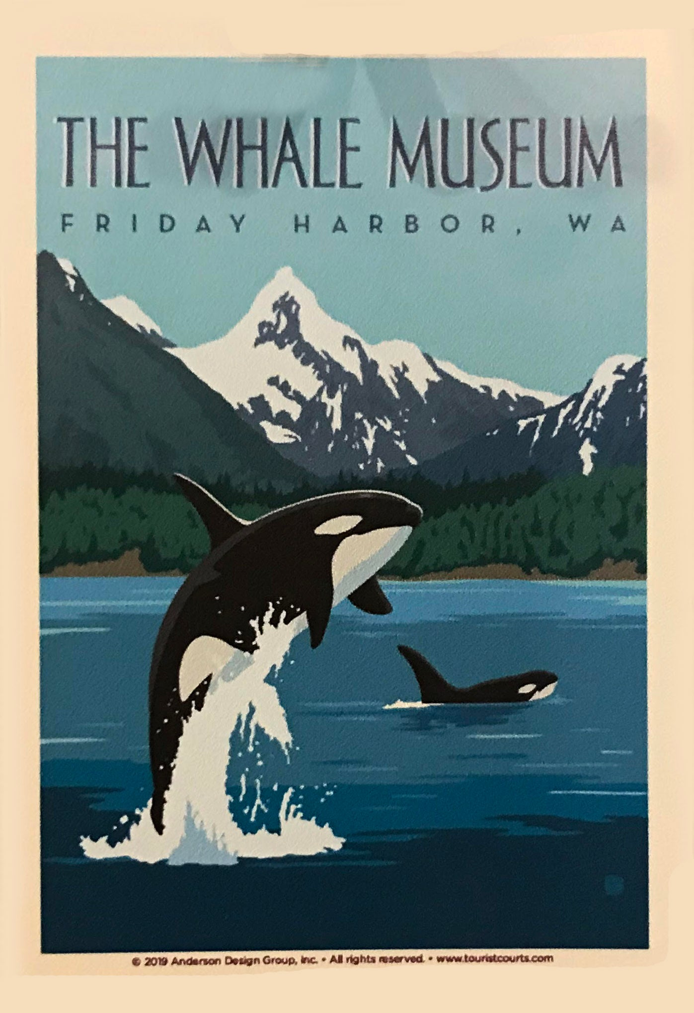 The Whale Museum Sticker: Orca