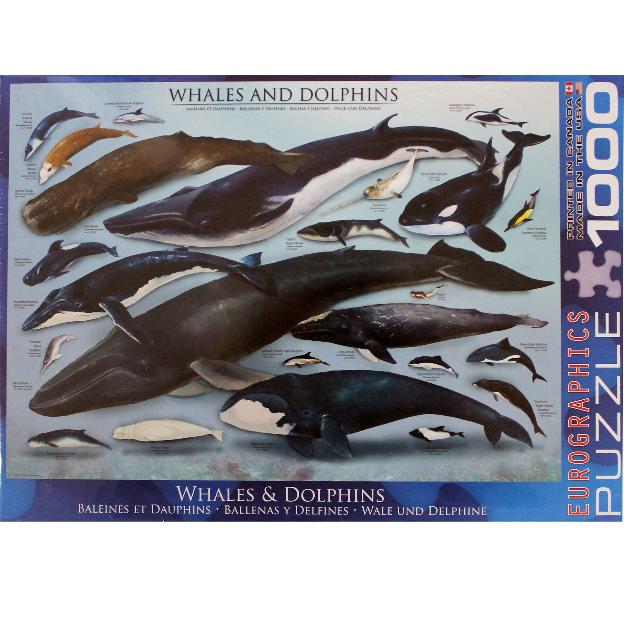 whales & dolphins puzzle 1000 piece