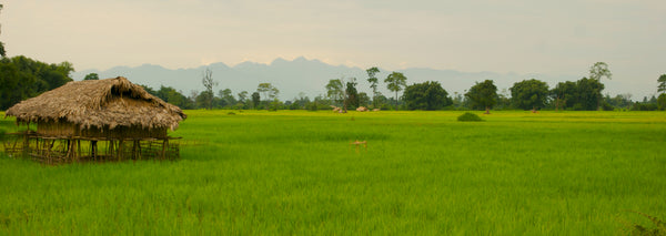 Rice fields in front of the Himalaya - pic: Jonas Grünewald -