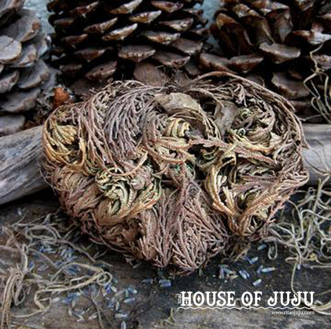 Rita's Rose of Jericho for Rebirth, New Growth, Blessings, Transformation