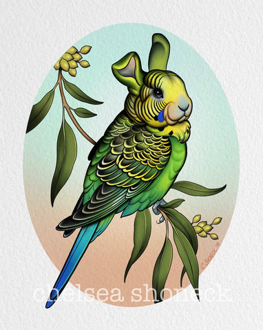March - Budgie