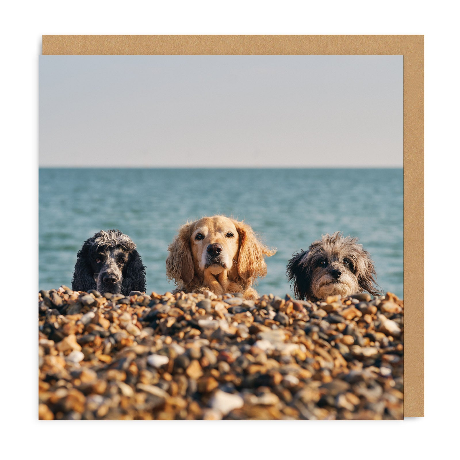 Three Beach Dogs Square Greeting Card