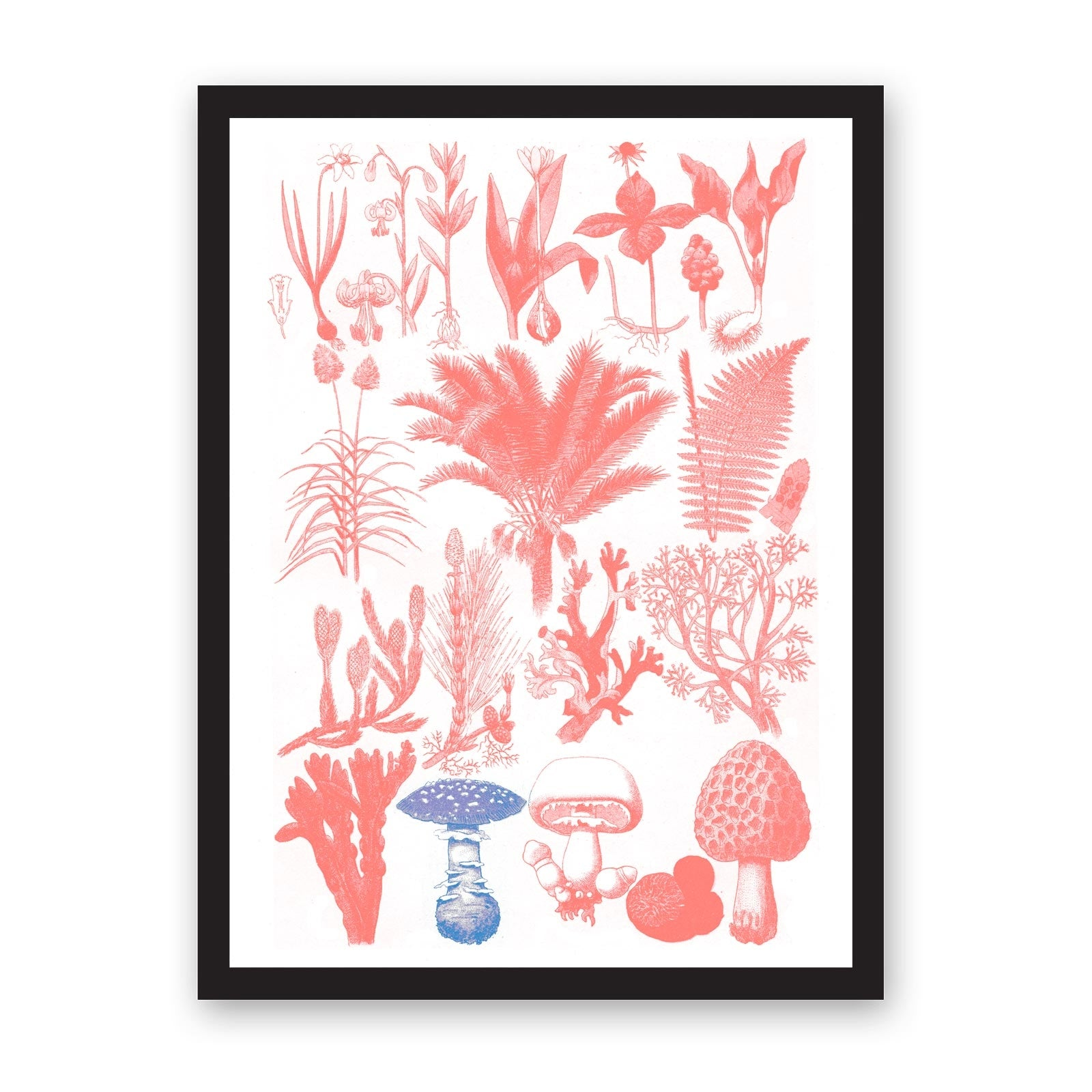A3 Collection of Flora Riso Print