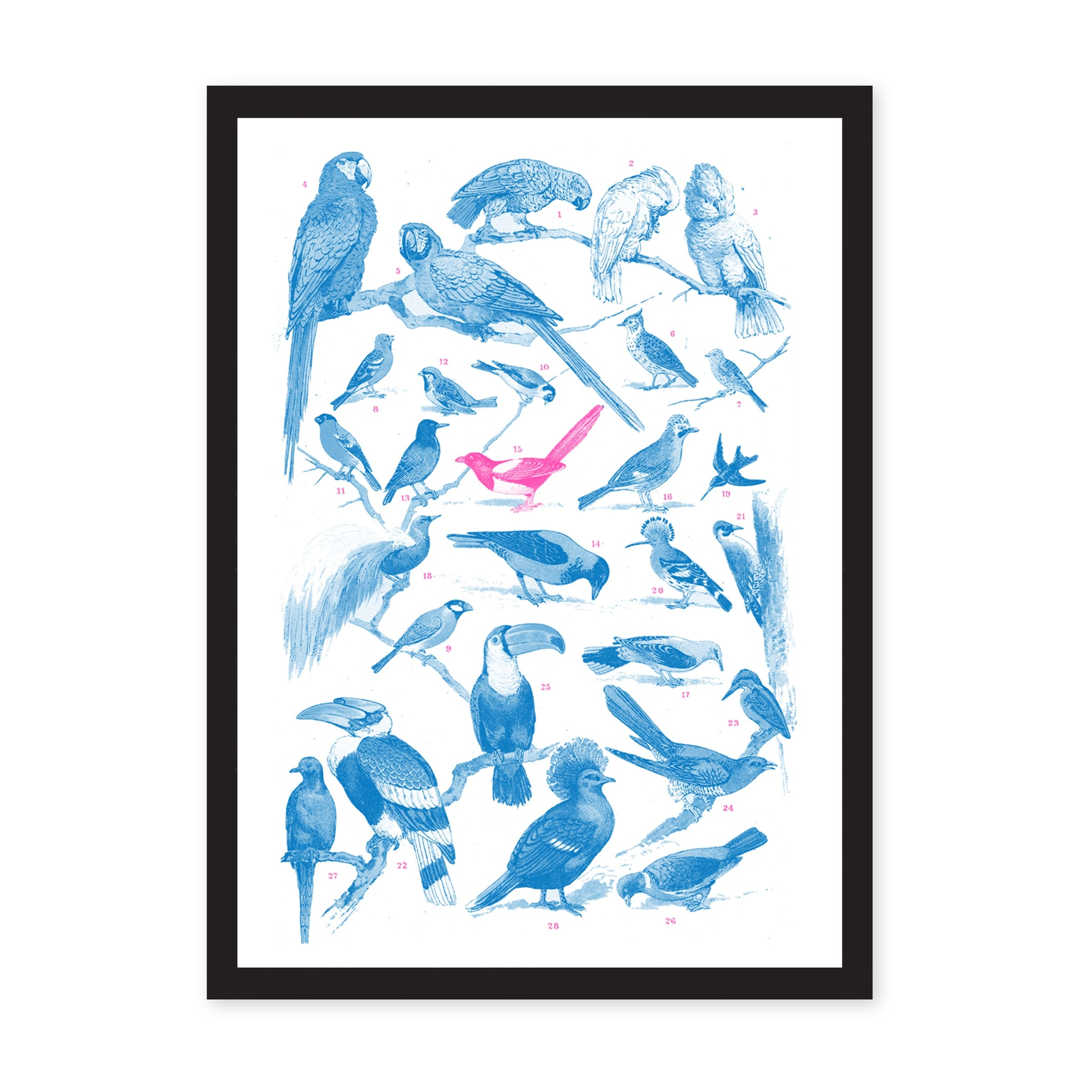 A3 Collection of Birds Riso Print
