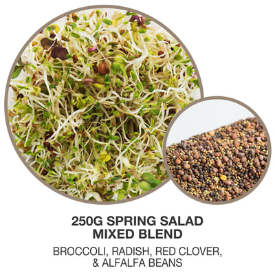 Mumm's Spring Salad Mix Sprouting Seeds