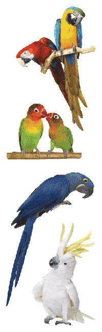 Exotic Birds Stickers - Mrs. Grossman's
