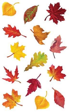 Falling Leaves Stickers - Mrs. Grossman's