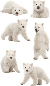 Polar Bear Cubs, stickers, Mrs. Grossman's Sticker Factory