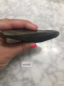 Megalodon Shark Tooth, North Carolina Number 123110