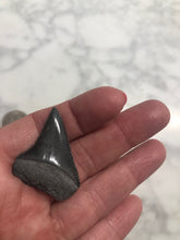 Load image into Gallery viewer, Great White Shark Tooth, Cherry Grove, S.C. Number 123112