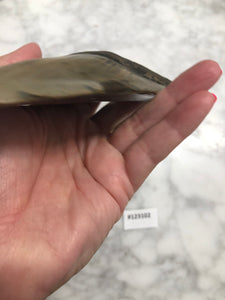 Megalodon Shark Tooth, North Carolina Number 123102