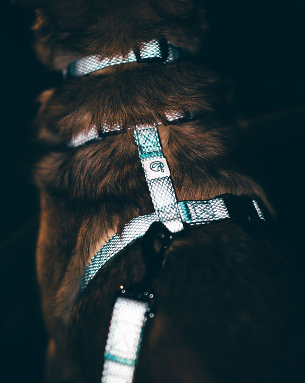 Illuminate Reflective Dog Lead