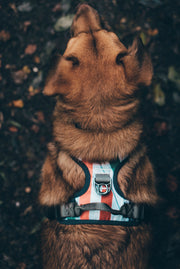 Urban Dog Harness - Pipeline