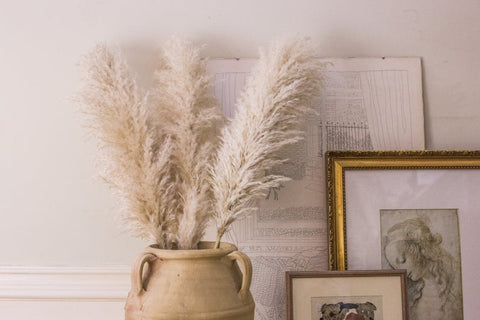 PAMPAS FLOWERS DECOR