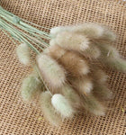 NATURAL BUNNY TAIL GRASS DECOR-60 pcs