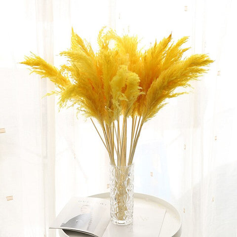 NATURAL COLORED PAMPAS GRASS