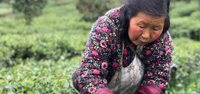 China Travels in Spring with the Rare Tea Lady